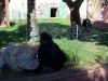 fasanolandia2010_046