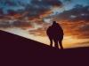 deserto_al_tramonto