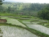 panorama_tailandese1